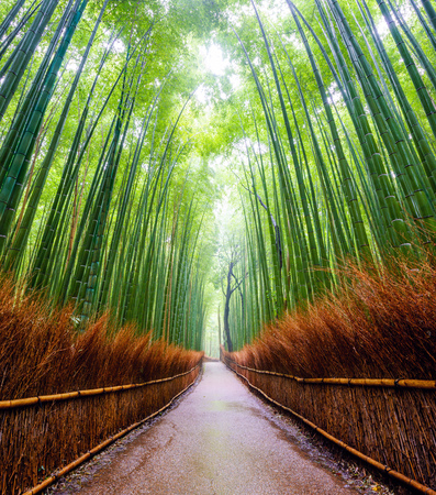 Path to bamboo forest Arashiyama Kyoto Japan Stock Photo