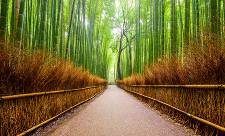 zen garden: Path to bamboo forest Arashiyama Kyoto Japan Stock Photo