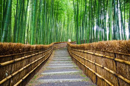 竹林嵐山京都へのパス 写真素材