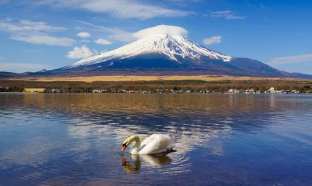 kawaguchi ko: White Swan with Mount Fuji at Yamanaka lake, Yamanashi, Japan Stock Photo