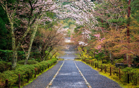 cherry blossoms: Path to japan shrine in autumn, Kyoto, Japan