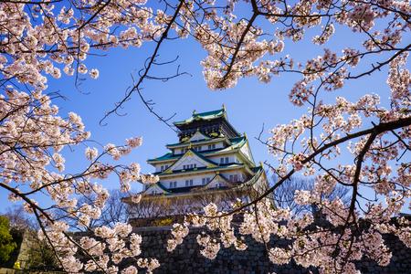 fleur de cerisier: Ch�teau d'Osaka dans la saison des cerisiers en fleur, Osaka, Japon �ditoriale