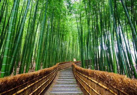 escalera: Camino al bosque de bambú, Arashiyama, Kyoto, Japón Foto de archivo