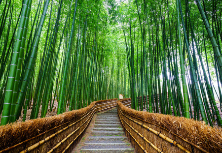 green forest: Path to bamboo forest, Arashiyama, Kyoto, Japan Stock Photo