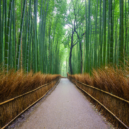 jungle foliage: Path to bamboo forest, Arashiyama, Kyoto, Japan Stock Photo