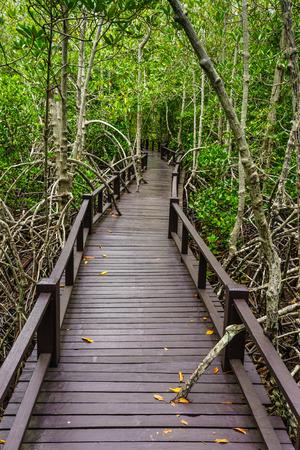 mistery: Wooden bridge to the jungle,Prachuap Khiri Khan,Thailand