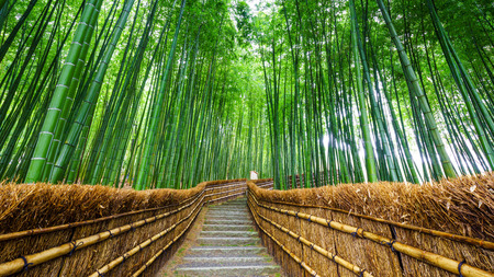 Path to bamboo forest, Arashiyama, Kyoto, Japan Stock Photo
