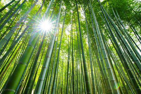 Bambuswald mit Sonnenaufgang, Arashiyama, Kyoto, Japan Standard-Bild