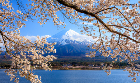Mt.Fuji and Cherry Blossom at lake Kawaguchiko,Yamanashi,Japan Stock Photo