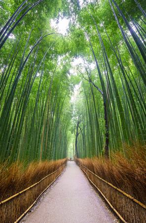 spring green: Path to bamboo forest, Arashiyama, Kyoto, Japan Stock Photo