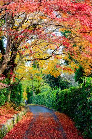 Beautiful autumn leaves on the road, Kyoto, Japan Banco de Imagens