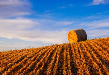 hayroll: Hay bales on the field at sunset, Tuscany, Italy