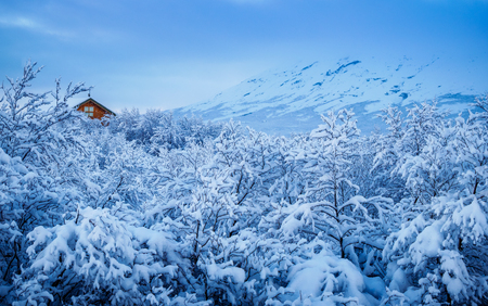 Frozen tree in winter, branch covered with snow, Iceland
