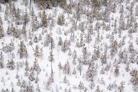 View on winter forest from air baloon Stock Photo - 4794699