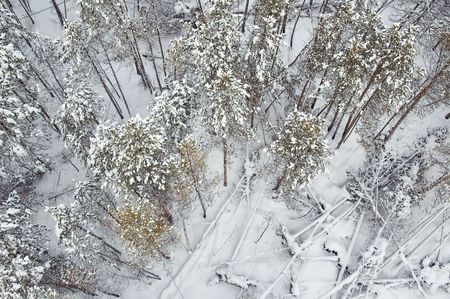 View on winter forest from air baloon Stock Photo - 4794698