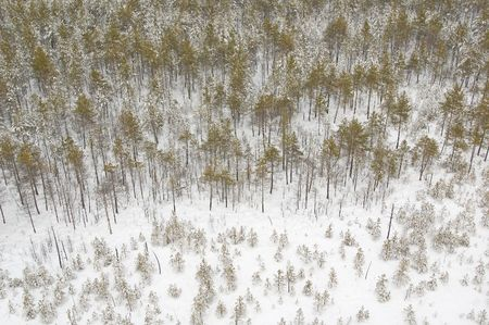 View on winter forest from air baloon Stock Photo - 4807956