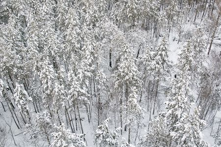 View on winter forest from air baloon Stock Photo - 4807957