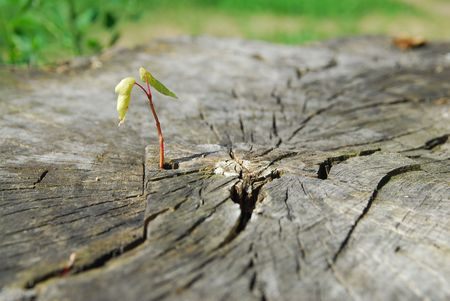 Young sprout growing in old cutting stub photo