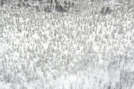 Winter forest in Siberia from bird flight photo