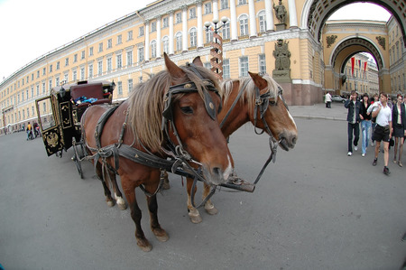 Saint-Petersburg, Russia - May 13, 2006: Crew with horses near Arch of General Staff Building and Hermitage