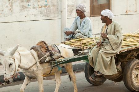 burro: Hurghada, Egipto - 07 de noviembre 2006: hombres egipcios montan su carro de burro en la calle Editorial