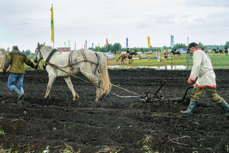 draught horse: Tyumen, Russia - June 24, 2016: The 5th open championship of Russia on a plowed land. Draught horse pulles plough through field. Draught horse was traditionally used in ploughing before the large scale mechanisation of farming.