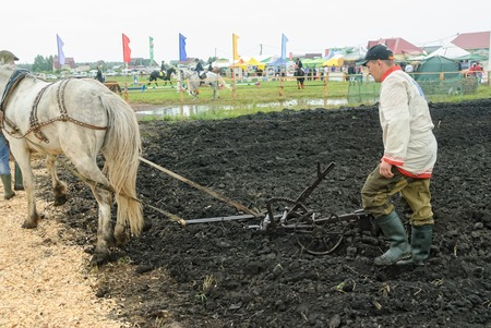 draught horse: Tyumen, Russia - June 24, 2016: The 5th open championship of Russia on plowed land. Draught horse pulles plough through field. Draught horse was traditionally used in ploughing before mechanisation Editorial