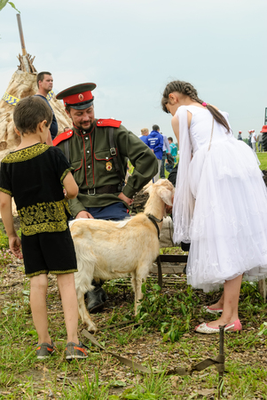 Tyumen, Russia - June 24, 2016: The 5th open championship of Russia on a plowed land. Cossack sits with goat