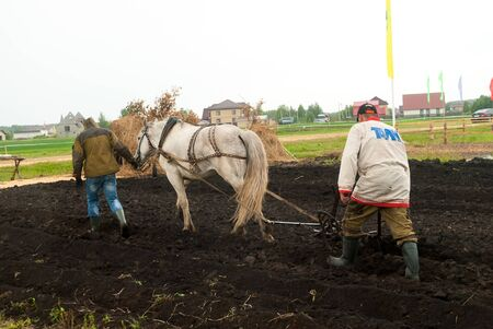 Tyumen, Russia - June 24, 2016: The 5th open championship of Russia on plowed land. Draught horse pulles plough through field. Draught horse was traditionally used in ploughing before mechanisation Editöryel