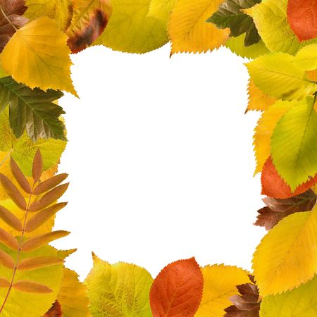 square frame of different autumn leaves on white. this image is a collage, so the resolution is bigger than the original resolution of my camera Stock Photo - 8109531