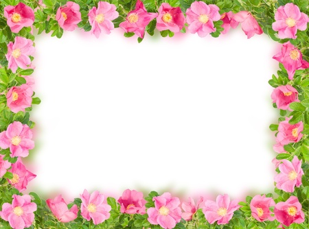 flower border: rectangular floral frame with pink briar on white Stock Photo