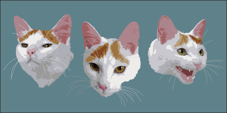Faces of a Cat Ilustrace