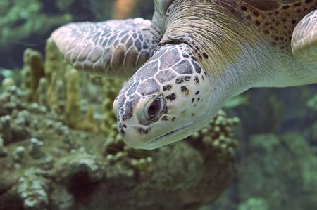 A big seaturtle photo