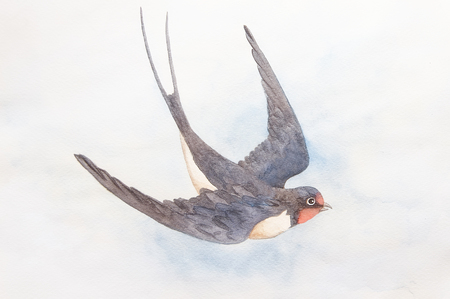 Watercolor hand drawn swallow in the blue sky