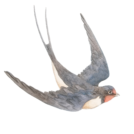 Watercolor hand drawn swallow isolated on a white background Archivio Fotografico
