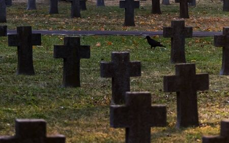 Bucharest, Romania - November 11, 2018: A crow walks among the crosses of soldiers killed in World War I are seen in the Heroes Cemetery Pro Patria, in Bucharest.