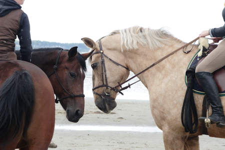 Two horses with riders touch noses at the seashore