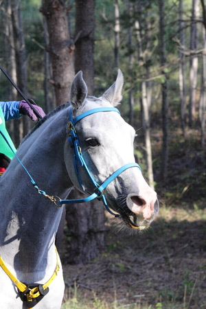endurance: white hoese at endurance comtetition grooming point