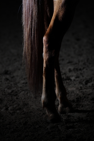 rasa: Brown horse hind legs and tail close up in dark of inside arena