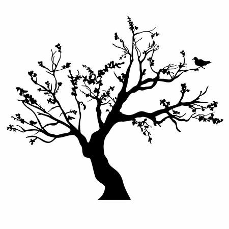 Silhouettes d'arbres Banque d'images - 23854502
