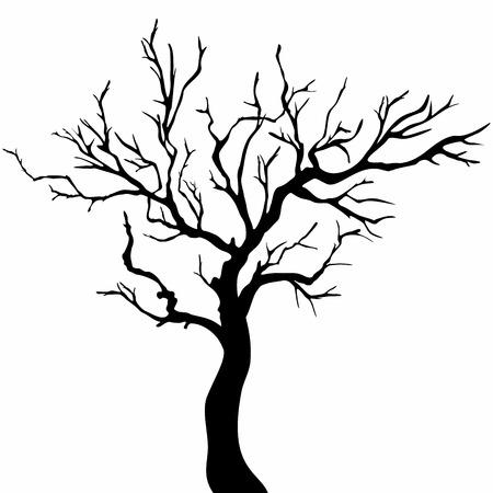 arboles blanco y negro: Siluetas del �rbol