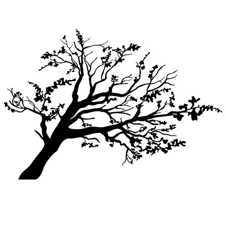 winter tree silhouette: Vector tree silhouette Illustration