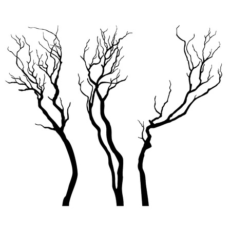 bareness: Bare branches isolated on white background