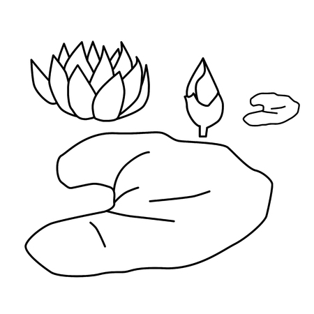 water lily colouring page vector