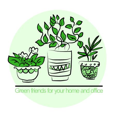 Cute pots with blloming housplants. Hand drawn vector illustration