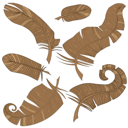 Vector set of isolated feathers