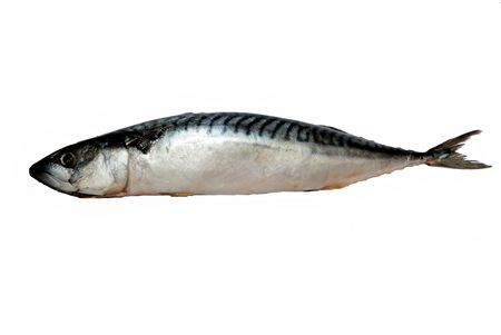 Frozen mackerel photo