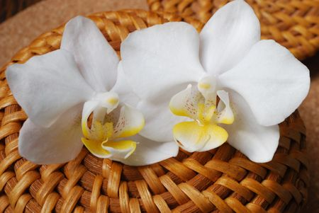 tender orchids on wood Stock Photo