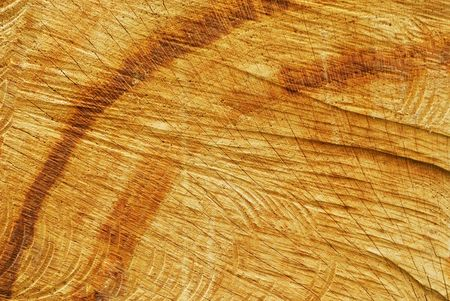Old oak sawn end (texture)