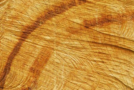 sawn: Old oak sawn end (texture)
